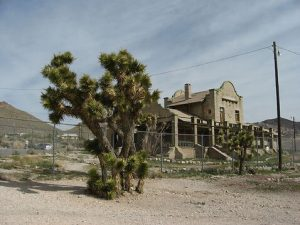 photo shows a joshua tree and an abandoned building in the rhyolite ghost town
